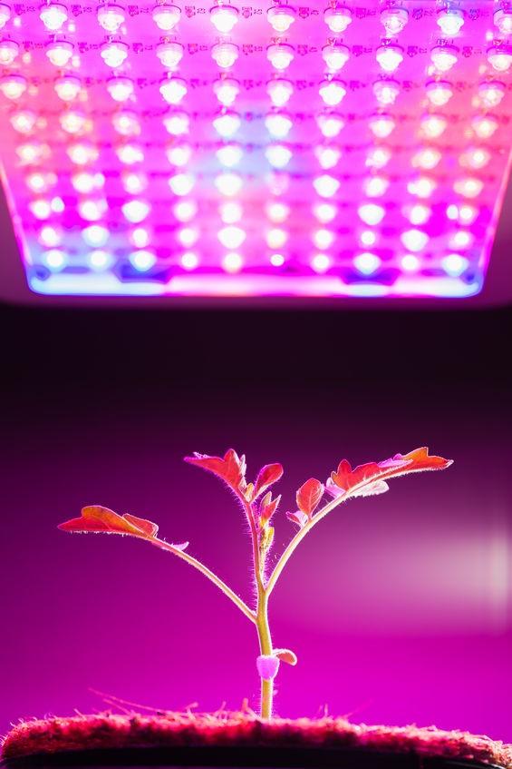 Fast Production Test Of UV-LEDs